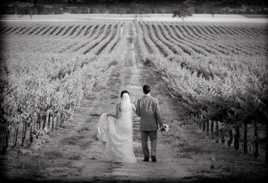 A final portrait of the wedding couple in the vineyard